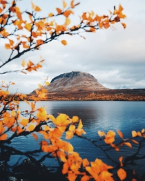Autumn colors in Finnish Lapland