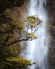 Autumn colours at Devils Punchbowl Falls in New Zealand