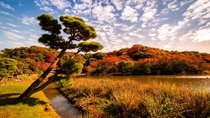 Autumn colours at Sankeien Garden in Tokyo Japan