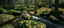 Autumn Creek in the Bavarian Outback of Germany Photo by Kilian Schnberger