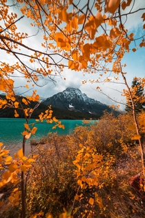 Autumn framing a pretty mountain Waterfowl Lakes Alberta Canada