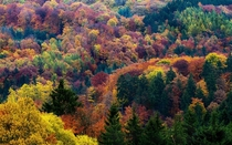 Autumn in all its beauty Eifel National Park Germany