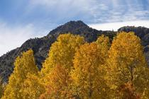 Autumn in Bishop California