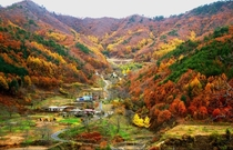 Autumn in Buldanggol Village Yeongdong County North Chungcheong Province South Korea
