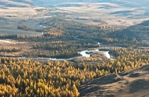 Autumn in full swing at Kuray Steppe - Altai Republic Southern Siberia Russian Federation