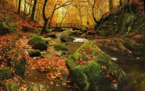 Autumn in Grizedale forest The lake district England