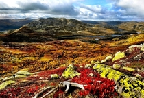 Autumn in the high plains of Hardangervidda Norway
