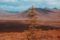 Autumn in Yukons tundra should be one of the seven natural wonders