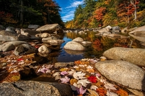 Autumn is a season where every leaf is a flower Kancamagus HIghwayNH