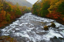 Autumn Leaves by Mountain Stream - Nikko Japan