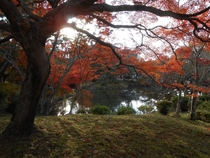 Autumn Leaves in Kyoto Japan