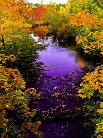 Autumn Maine stream