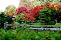 Autumn Maples at the Japanese Garden  OC