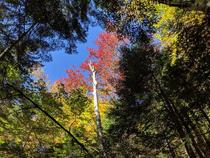 Autumn on the hike to Arethusa Falls  Harts Location New Hampshire x