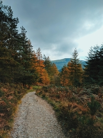 Autumn Path - Moel Famau Wales