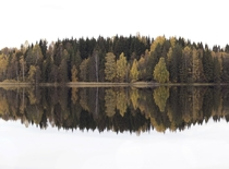 Autumn symmetry near Jessheim Norway