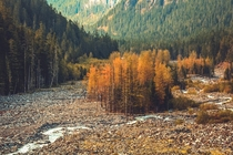 Autumn tones in Mount Rainier National Park Washington  itkjpeg