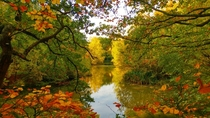 Autumnal Colours  Epping Forest UK