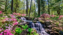 Azalea Path Gardens in Hazleton IN   Bir Hundgenn