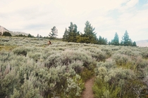Backcountry trails in Yellowstone