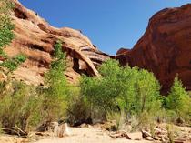 Backpacking Coyote Gulch Canyons of Ecalante Utah View of Cliff Arch  x