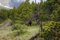 Backpacking in Glacier National Park every corner can hold a new surprise Grizzly Bear Ursus arctos spp