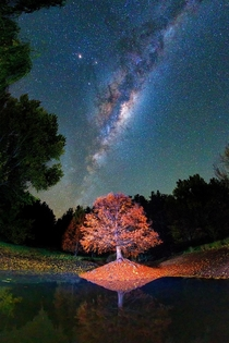 Balingup Tree Park at Night Balingup Western Australia  IG paulmp