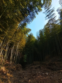 bamboo at mountains in middle of Hunan province