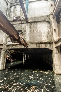 Basement in Abandoned Shopping Mall Supports Population of Exotic Koi and Catfish - Bangkok  by Jesse Rockwell