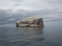 Bass Rock Gannet Colony Scotland