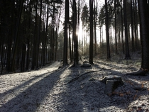 Bavarian Forest after Snowfall Falkenstein Germany