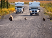 Bear Family is leading the way