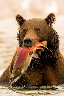 Bear-Fishing Care for a fish