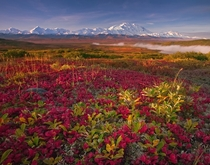 Bearberries in Denali National Park Alaska  Photo by Kevin McNeal