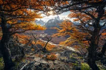 Beautiful autumn colours in Patagonia  marcograssiphotography