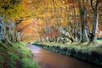 Beautiful Autumn colours Templepatrick Northern Ireland