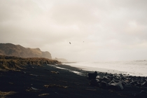 Beautiful black sand beaches - Vk Iceland