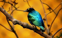 Beautiful bluegreen bird Sent it to rspecies for identification