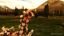 Beautiful Flowers And The Mountain Behind it At Phandar Valley Pakistan