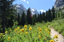 Beautiful hike up to Inspiration Point in the Tetons -