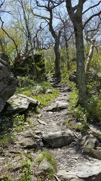 Beautiful path in Shenandoah National Park