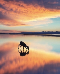 Beautiful pic of a deer with the sky reflecting on the water