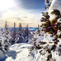 Beautiful route through the trees Big White Kelowna  by Beth P