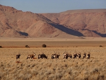 Beautiful shot of wild Oryx gazelles Tirasberg conservancy Namibia