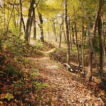 Beautiful walk last fall through Petrifying Springs Park in Kenosha WI