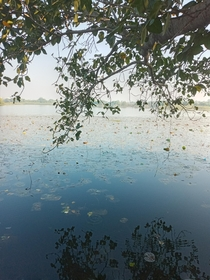 Beautiful waterbody of Central India Nagpur India