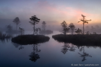 Beauty of Estonia - Bogs