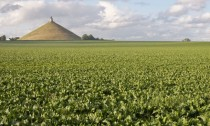 Beets cultivated on site of famous Battle of Waterloo in Belgium