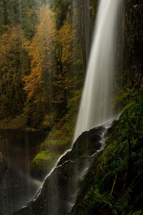 Behind the Autumn Veil -- Silver Falls State Park on a rainy fall morning