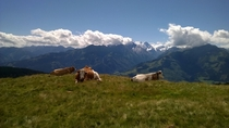 Best capture Ive ever done with a phone Cows chilling in the Austrian alps